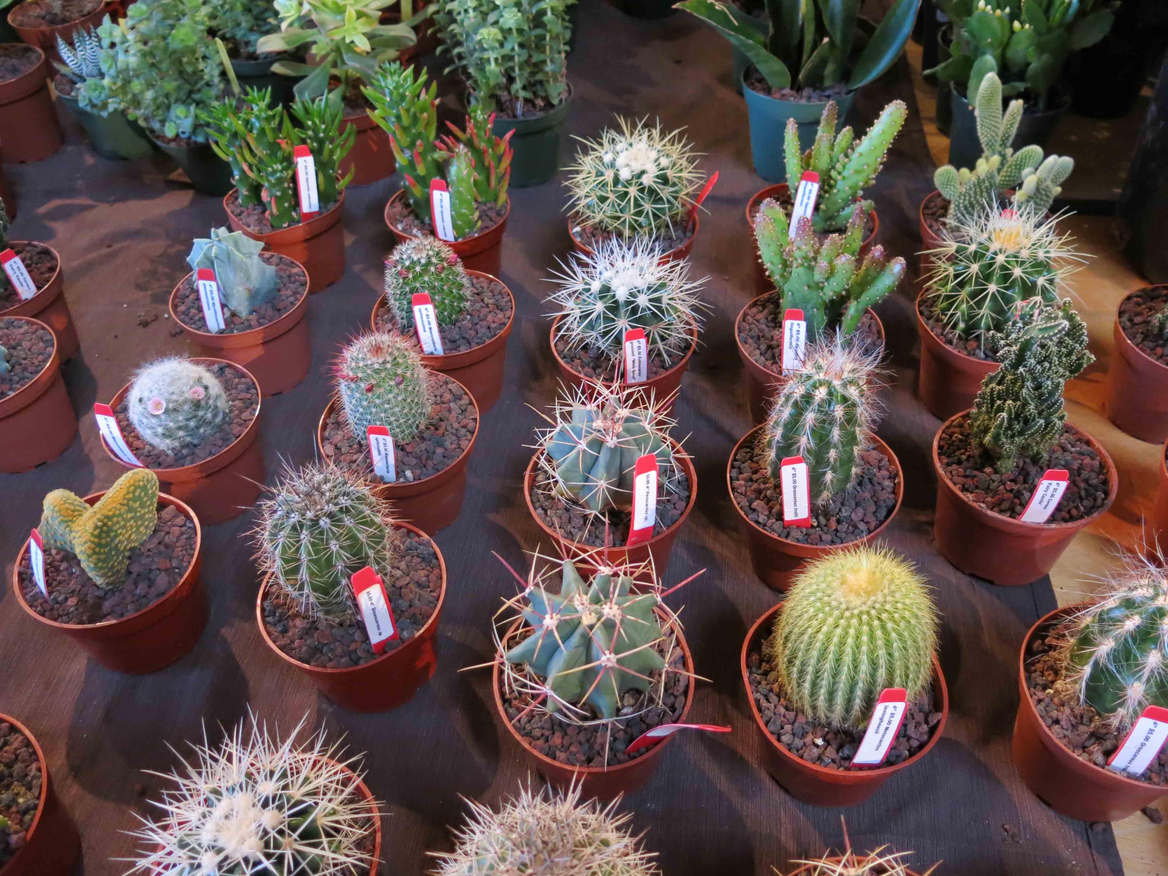 the cactus sale the miserable gardener. Black Bedroom Furniture Sets. Home Design Ideas