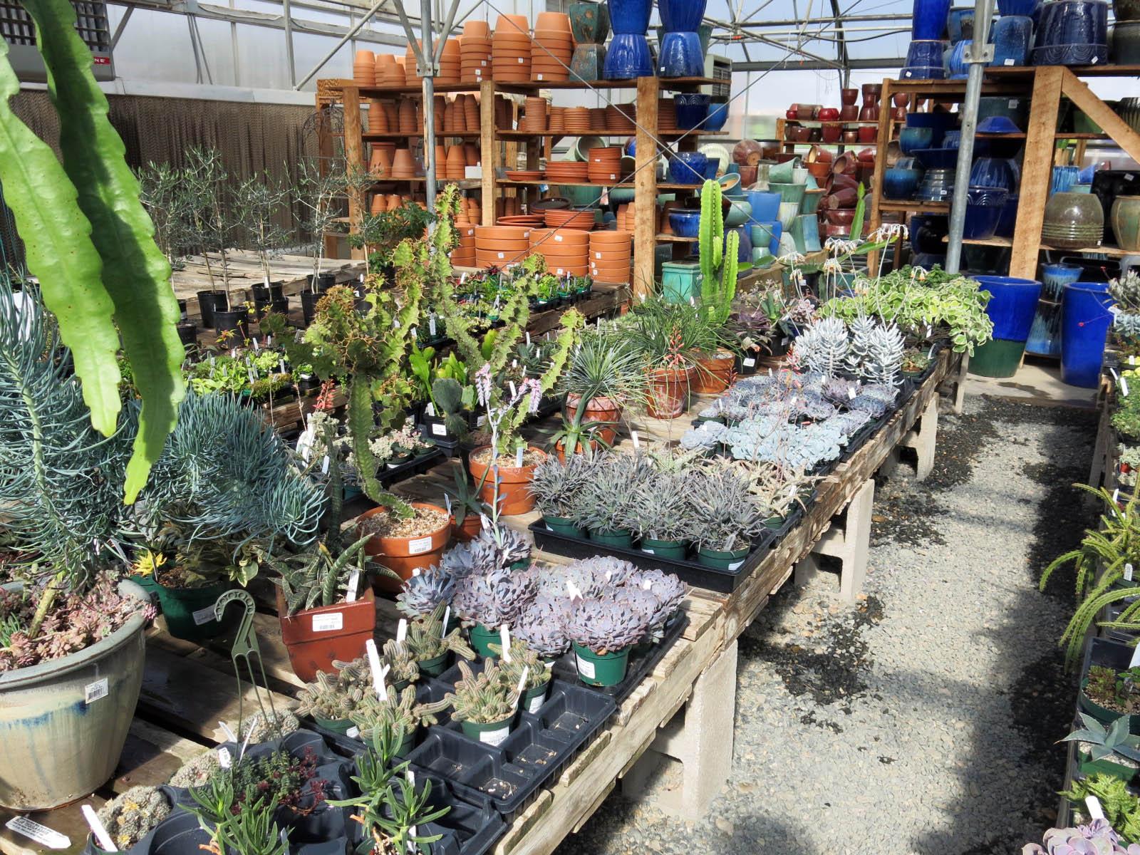 Timberline Gardens The Miserable Gardener