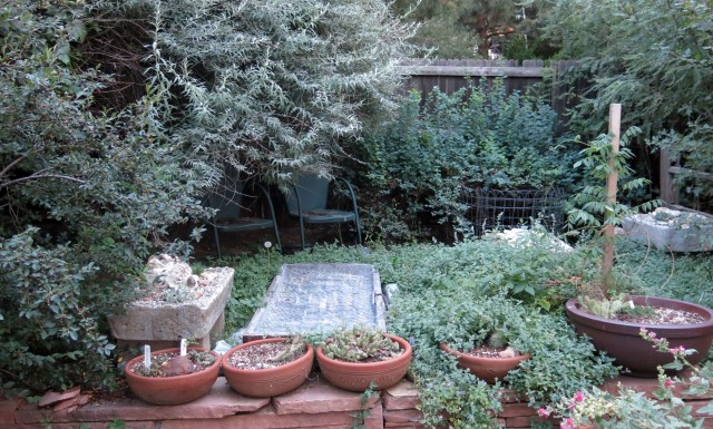 the trough patio, kind of overgrown with catmint. seed frame in the middle.