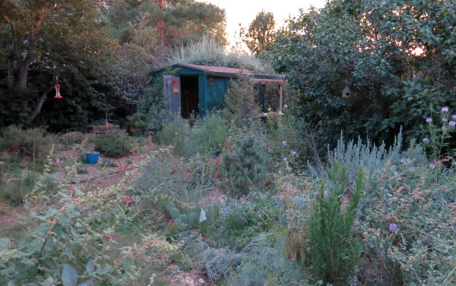 looking toward the shed; the garden isn't as messy as it looks
