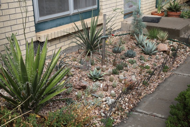 the front cactus garden