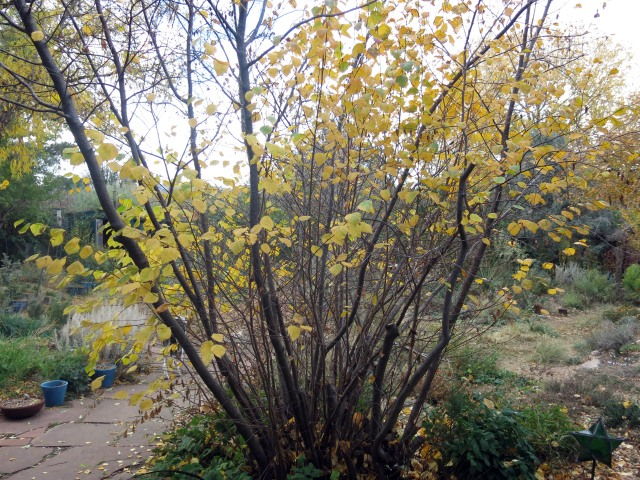 lost almost all its leaves