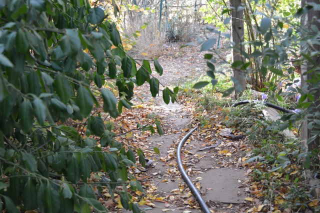 "the path by the shed. the hose is going into ""the enclosure"". a little farther down, the path forks, one going right (north), to the ""way back"", and the other goes past the trough patio, and then left (south) to the ""employees only"" section."